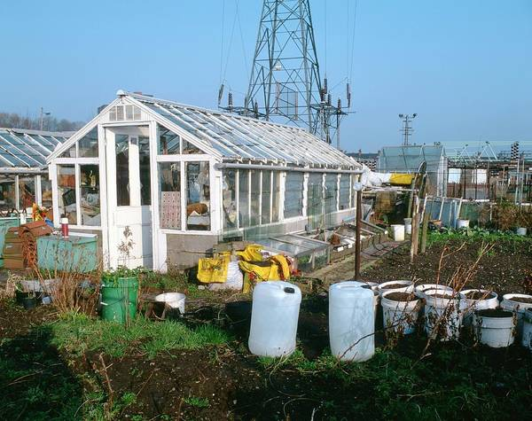 Vegetable Patch Wall Art - Photograph - Urban Allotments by Robert Brook/science Photo Library