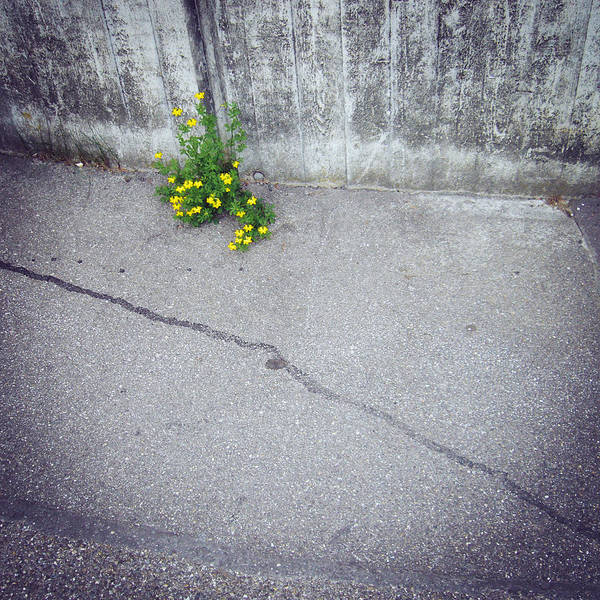Urban Flora - Yellow Flower And Grey Asphalt Art Print