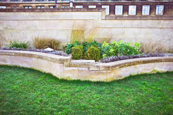 Wall Art - Photograph - Urban Garden by Tom Gowanlock