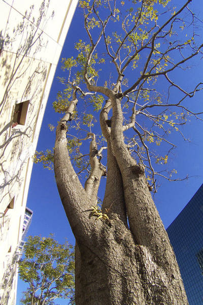 Photograph - Urban Trees No 1 by Ben and Raisa Gertsberg