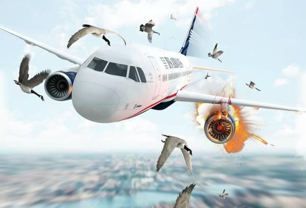 Bird Strike Wall Art - Photograph - Us Airways Flight 1549 Incident by Claus Lunau/science Photo Library