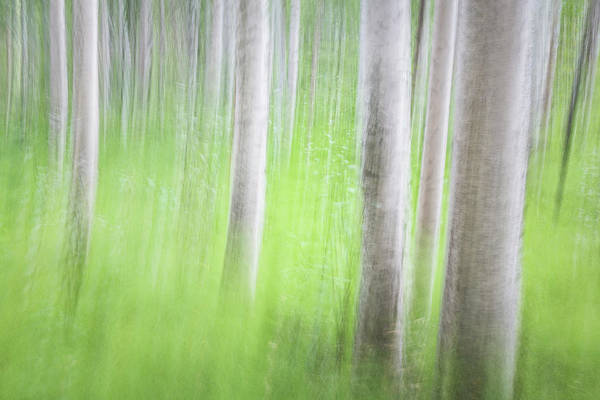 Wall Art - Photograph - Usa, Alaska Abstract Motion Blur by Jaynes Gallery