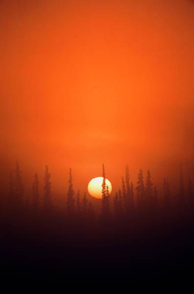 Coniferous Tree Photograph - Usa, Alaska, Fairbanks, View Of Sunrise by Hugh Rose