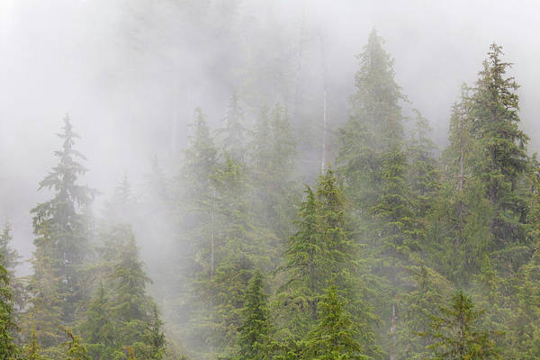 Hemlock Photograph - Usa, Alaska Fog In Spruce And Hemlock by Jaynes Gallery