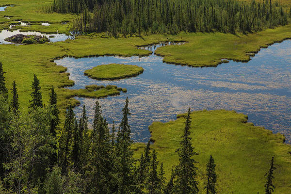 Boreal Forest Photograph - Usa, Alaska Landscape With Moose Pond by Jaynes Gallery
