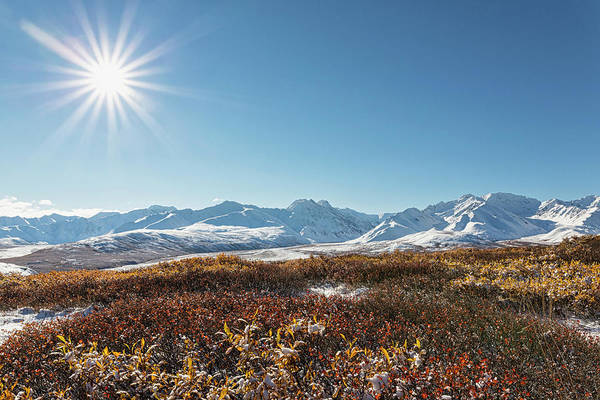 Alaska Photograph - Usa, Alaska, Shrub In Front Of Alaska by Westend61