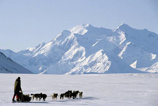 Wall Art - Photograph - Usa, Alaska, Sled Dogs, Park Ranger by Gerry Reynolds