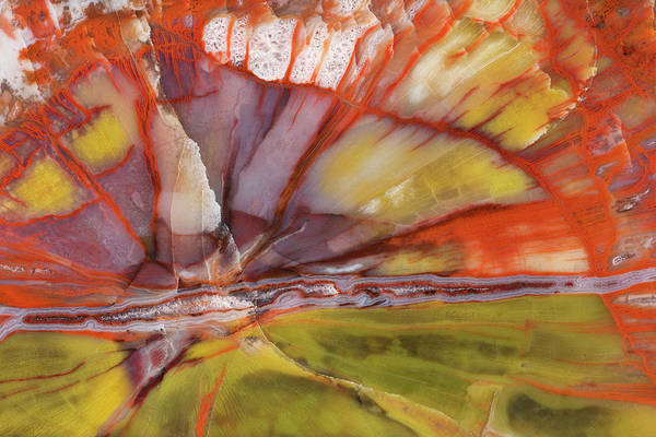 Petrified Wood Photograph - Usa, Arizona Close-up Of Petrified Wood by Jaynes Gallery