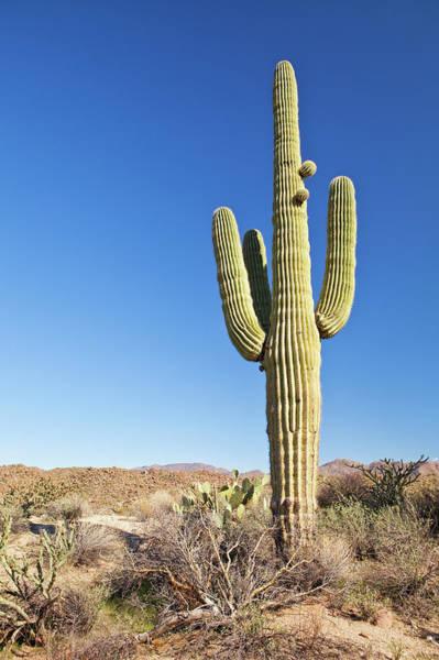 Southwest Usa Photograph - Usa, Arizona, Phoenix, Saguaro Cactus by Bryan Mullennix