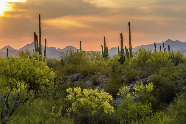 Cactus Flower Photograph - Usa, Arizona, Saguaro National Park by Jaynes Gallery