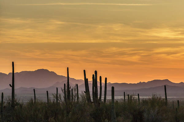 Sonoran Desert Photograph - Usa, Arizona, Tucson Mountain Park by Jaynes Gallery