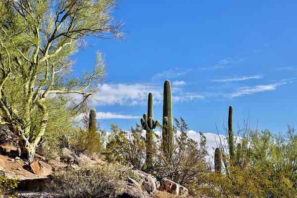 Wall Art - Photograph - Usa, Arizona, Tucson, Path by Hollice Looney