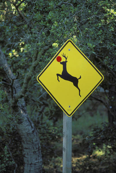 Red Deer Photograph - Usa, California A Prankster Converted by Jaynes Gallery