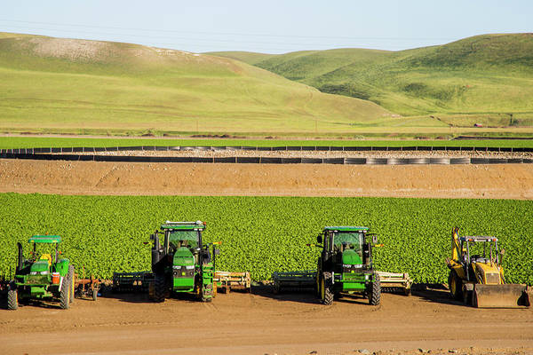 Wall Art - Photograph - Usa, California Agricultural Fields by Alison Jones
