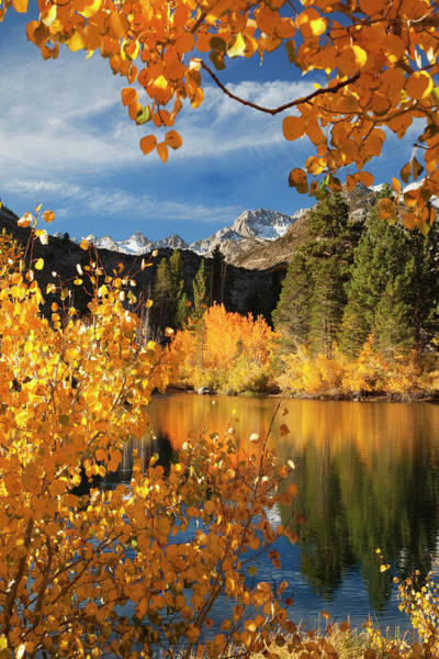 Bishop Photograph - Usa, California Autumn Color In Bishop by Jaynes Gallery