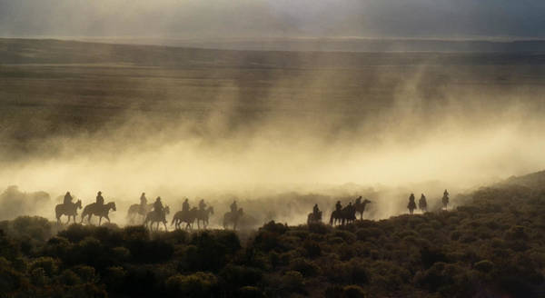 Collins Photograph - Usa, California, Bishop, Cattle Drive by Ann Collins