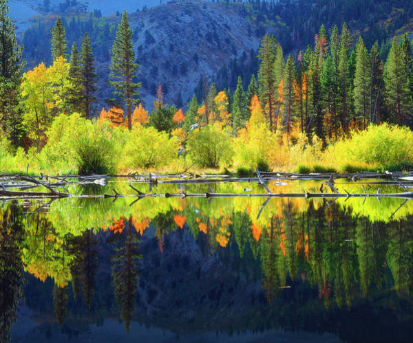 Beaver Pond Wall Art - Photograph - Usa, California, Fall Colors Reflecting by Jaynes Gallery