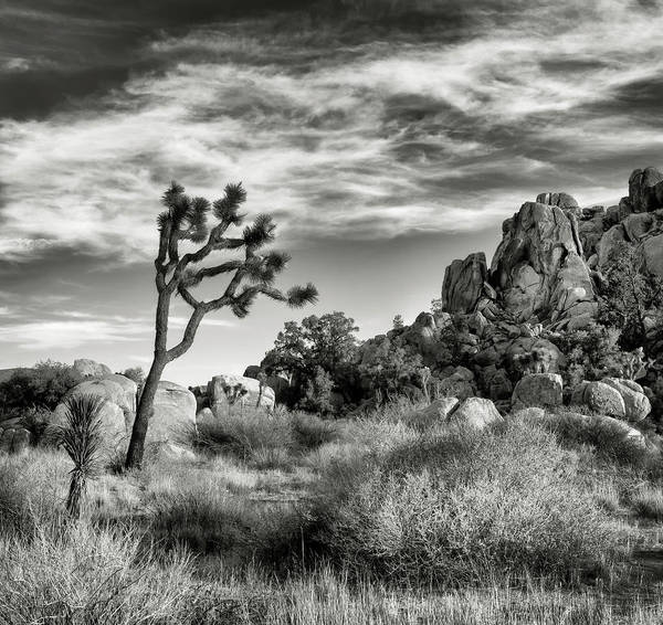Mojave Photograph - Usa, California, Joshua Tree National by Ann Collins