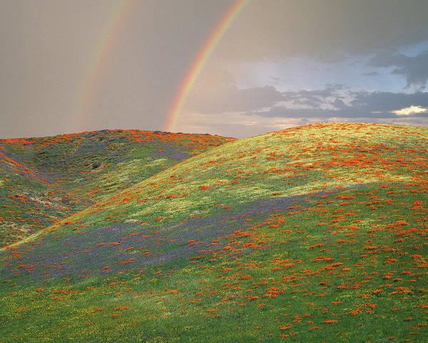 California Poppy Photograph - Usa, California, Near Gorman by Jaynes Gallery