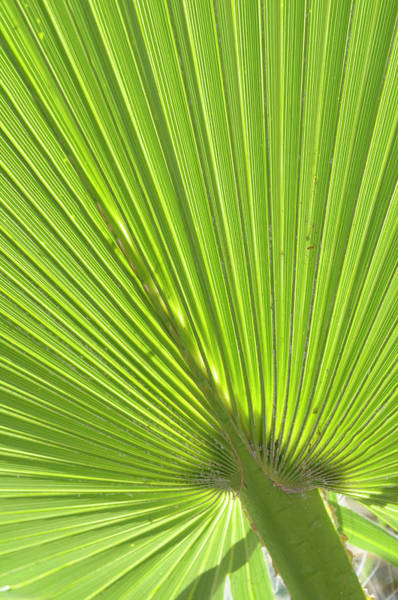 Wall Art - Photograph - Usa, California, Palm Springs, Indian by Kevin Oke