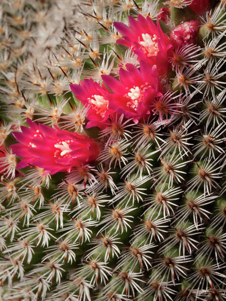 Collins Photograph - Usa, California, San Diego, Tiny Blooms by Ann Collins