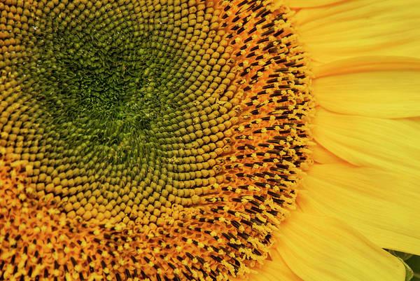 Sunflower Seeds Photograph - Usa, California, Santa Barbara, Lower by Alison Jones
