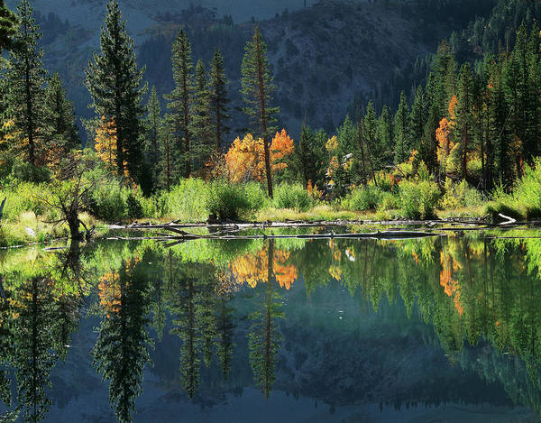 Beaver Pond Wall Art - Photograph - Usa, California, Sierra Nevada by Christopher Talbot Frank