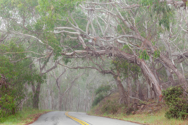 Montana De Oro State Park Photograph - Usa, California Tree-lined Road by Jaynes Gallery