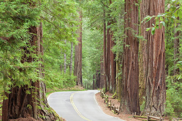 Big Basin Photograph - Usa, California View Of Road by Jaynes Gallery