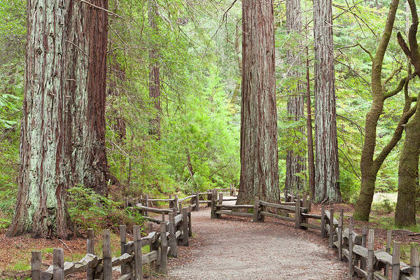 Big Basin Photograph - Usa, California View Of Trail by Jaynes Gallery