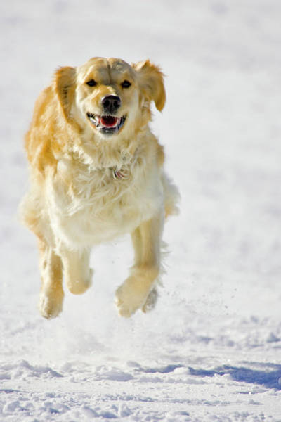 Canine Photograph - Usa, Colorado, Copper Mountain Resort by Jaynes Gallery