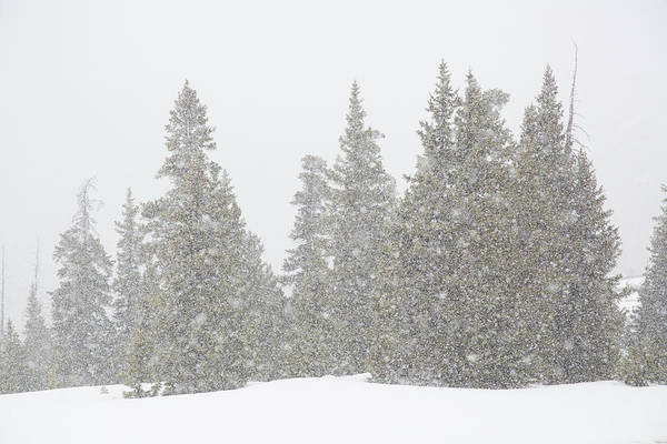 Continental Divide Photograph - Usa, Colorado Summer Snowstorm by Jaynes Gallery