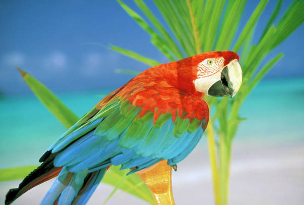 Wall Art - Photograph - Usa, Hawaii Parrot by Sunstar