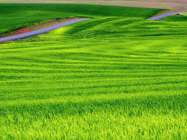 Backroad Wall Art - Photograph - Usa, Idaho, Palouse, Rolling Green by Terry Eggers