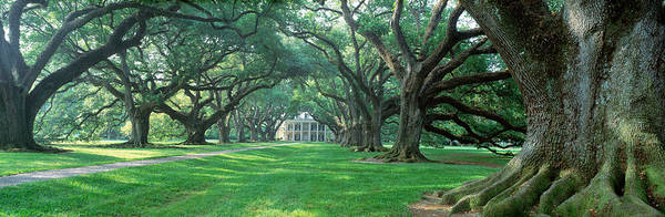 Thicket Photograph - Usa, Louisiana, New Orleans, Oak Alley by Panoramic Images