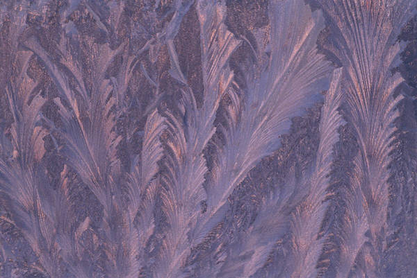Feathery Photograph - Usa, Michigan, Feathery Frost Patterns by Jaynes Gallery