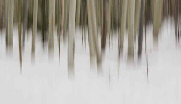 Impression Photograph - Usa, New Mexico Artistic Blur Of Aspen by Brenda Tharp