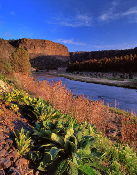 Crooked River Photograph - Usa, Oregon Castle Rock Above Crooked by Jaynes Gallery