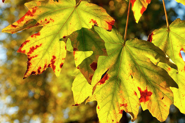 Wayside Photograph - Usa, Oregon, Larwood Wayside, Fall by Rick A Brown