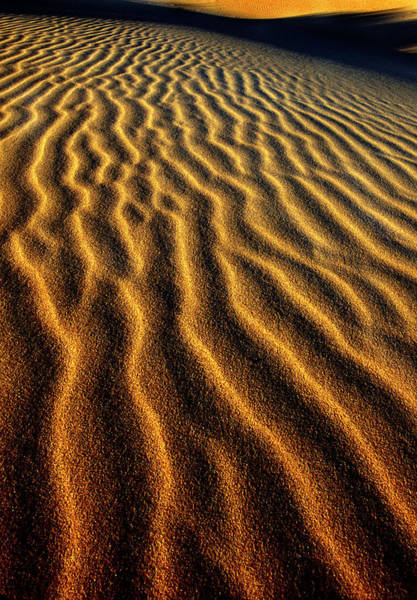 Oregon Dunes Photograph - Usa, Oregon, Oregon Dunes National by Jaynes Gallery