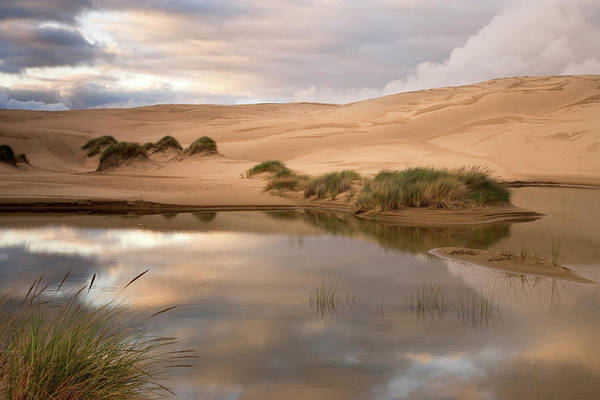 Oregon Dunes Photograph - Usa, Oregon, Siuslaw National Forest by Jaynes Gallery