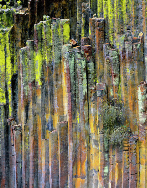 Orange Lichen Photograph - Usa, Oregon, Umpqua National Forest by Jaynes Gallery