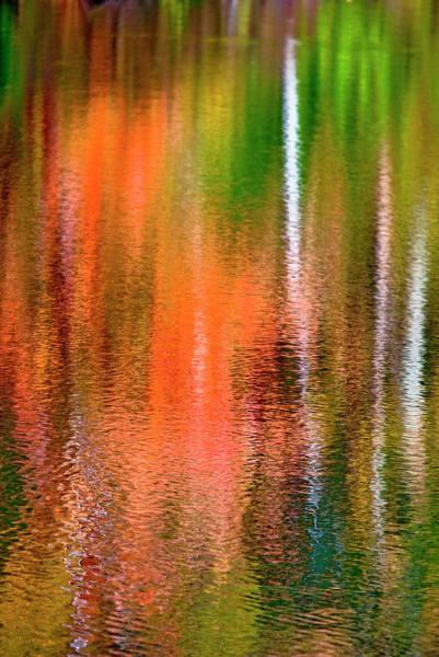 Green Jay Photograph - Usa, Pennsylvania, Delaware Watergap by Jaynes Gallery