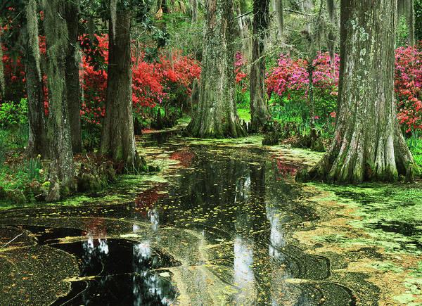 Cypress Gardens Photograph - Usa, South Carolina, Charleston, View by Adam Jones
