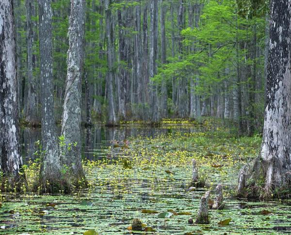 Cypress Gardens Photograph - Usa, South Carolina, Cypress Gardens by Jaynes Gallery