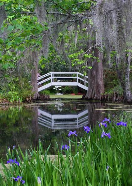 Cypress Gardens Photograph - Usa, South Carolina, Magnolia Gardens by Jaynes Gallery