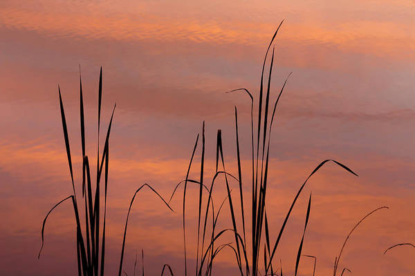 Cattails Wall Art - Photograph - Usa, Tennessee, Falls Creek Falls State by Jaynes Gallery