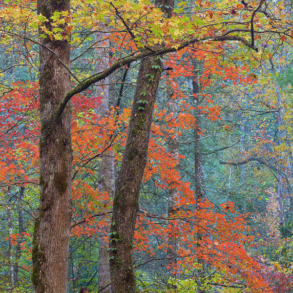 Wall Art - Photograph - Usa, Tennessee Forest Scenic In Autumn by Jaynes Gallery