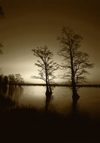 Bald Cypress Wall Art - Photograph - Usa, Tennessee, Reelfoot National by Adam Jones
