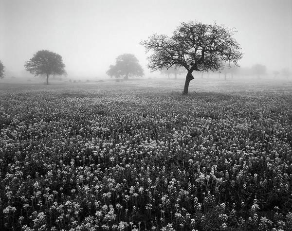 Texas Bluebonnet Photograph - Usa, Texas, Hill Country, View Of Texas by Adam Jones